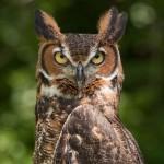 123 owl