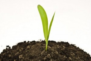 picture_of_plant_to_grow_in_the_soil_169075