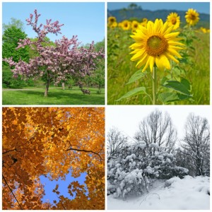 seasons canstockphoto9046473 300x300 2012 End of Year Bonus Issue: TJEd Inspire Newsletter