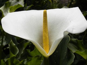 320px-White_and_yellow_flower